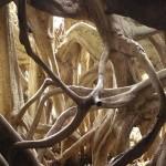 Munduk-Giant-Banyan-roots